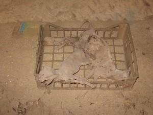 Gatti mummificati sotto la città