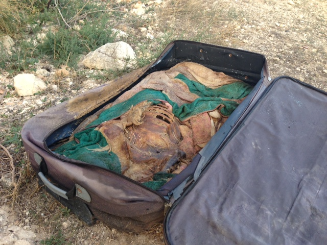 La valigia con i resti del cane
