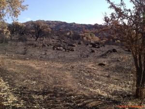 La valle annerita dalle fiamme