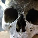 Cranio Sardegna