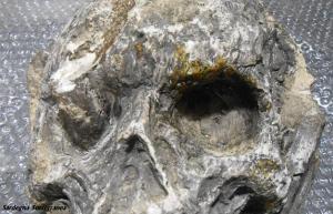 Il cranio misterioso