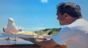 Gabbiano_pranza_in_barca