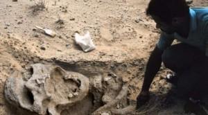 scheletro-gigante