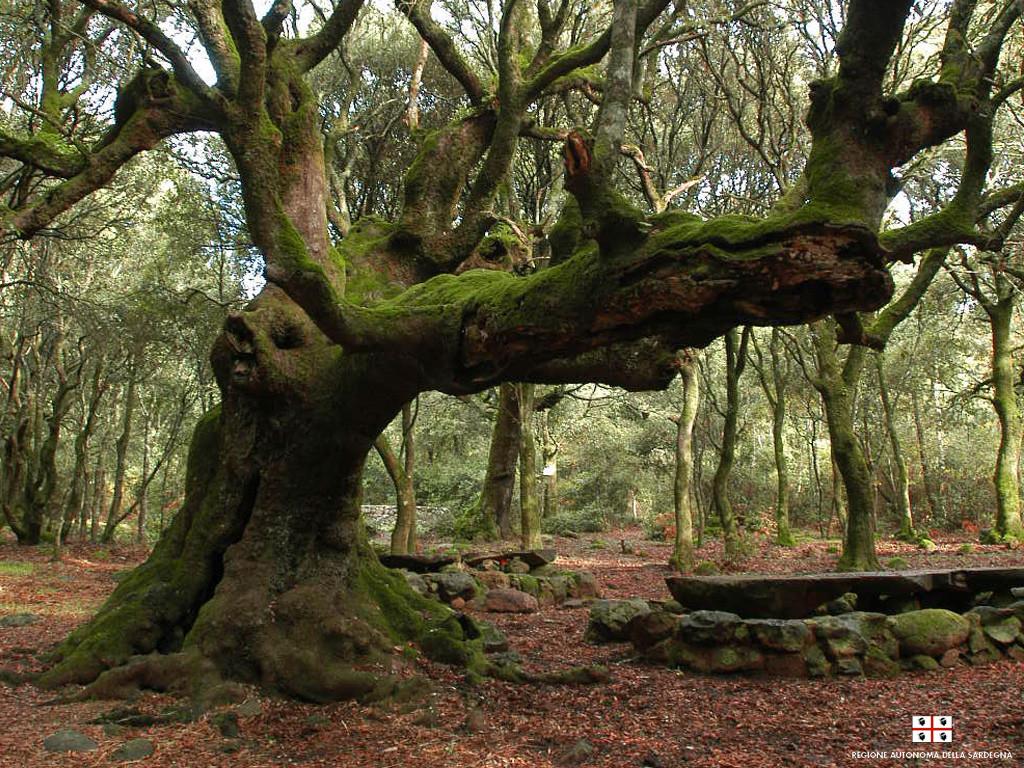 Foresta sarda in una immagine della Regione Sardegna.