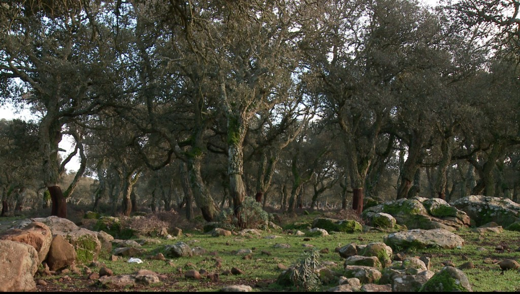 La tipica foresta sarda con la presenza del sughero...