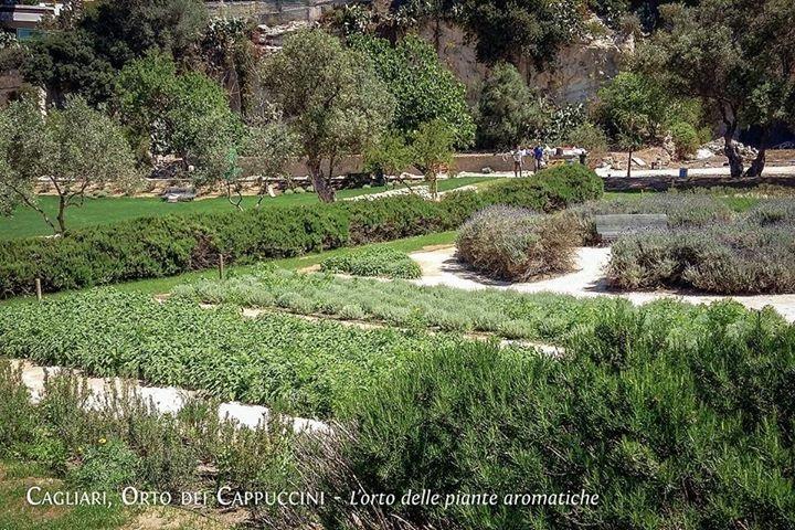 L'area della piante essenziali