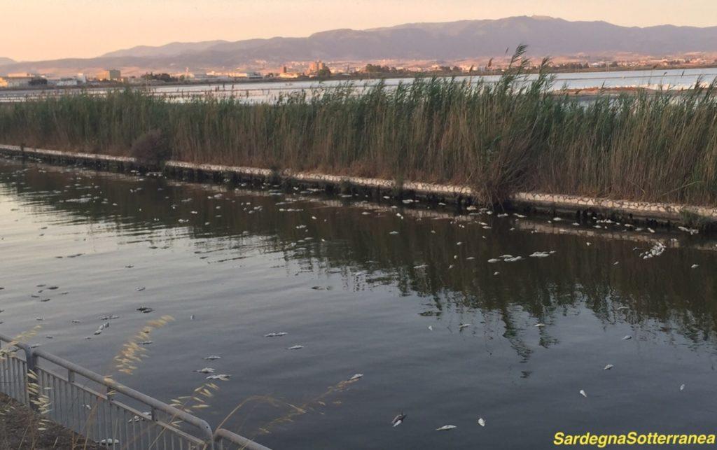I pesci morti nel canale