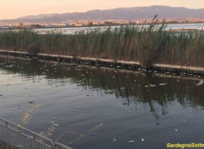 Nuova strage di pesci alle porte di Molentargius
