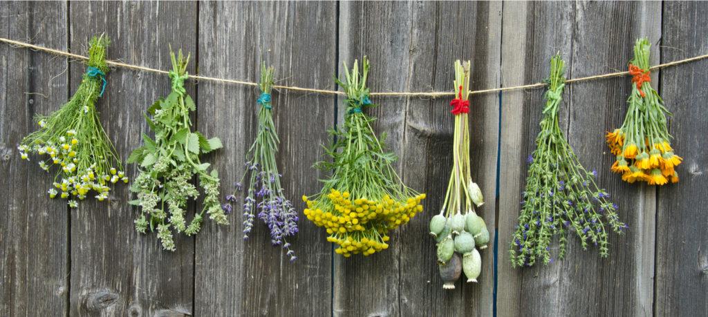 Alcune delle erbe magiche