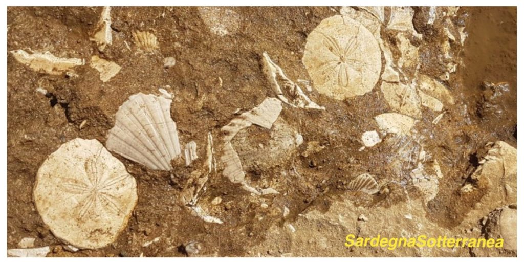 Alcuni dei fossili visibili nel parco