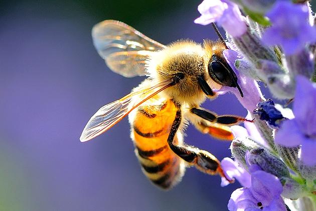 Un'ape.