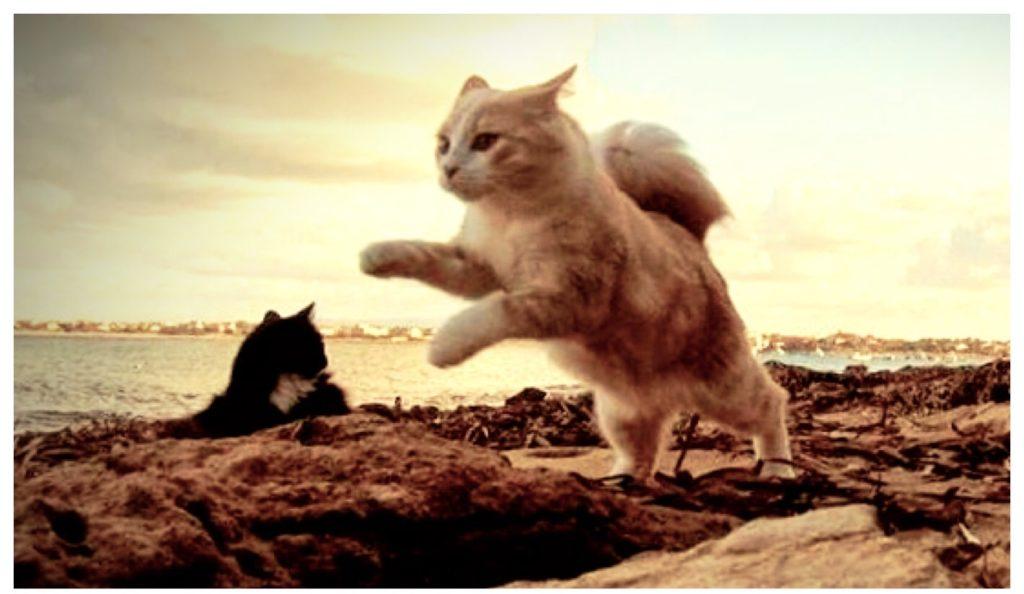 I gatti della colonia de Su Pallosu.