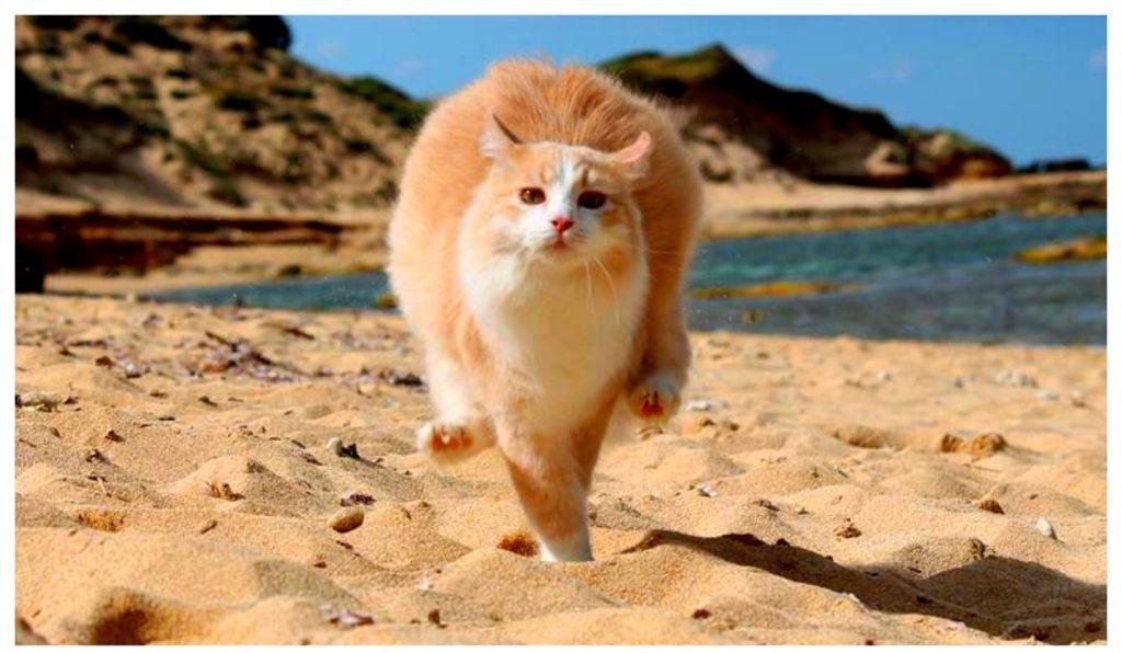 Uno dei gatti della colonia felina di Su Pallosu.