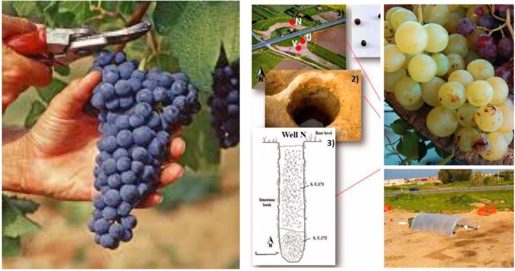 Scoperta vini Sardegna