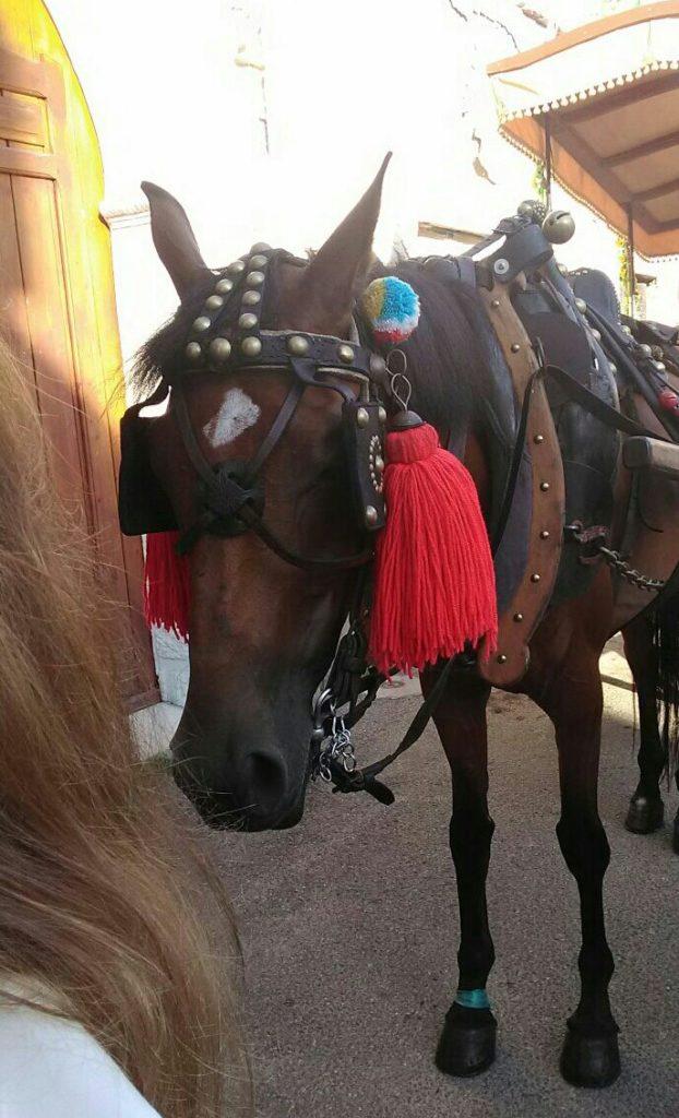 Cavallo calci